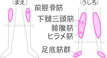 柔軟講座・足の疲れやつまずき予防に効く筋肉
