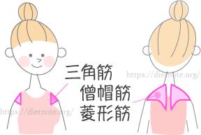 柔軟講座・肩こりに効く筋肉